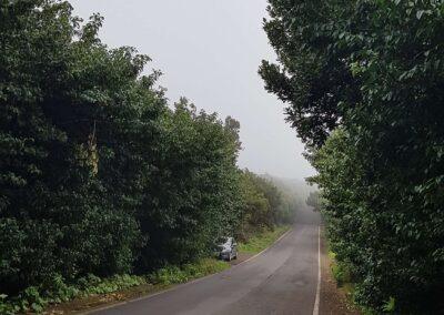 silnice v lese Anaga