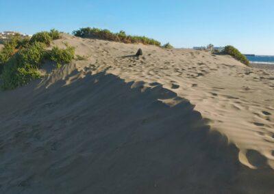 porostlé písečné duny