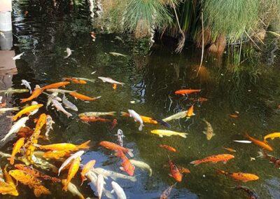 jezírko s rybami