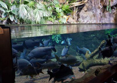 akvárium s rybami