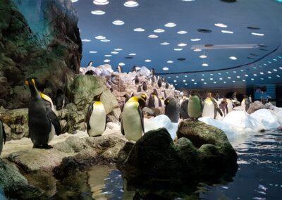 tučňáci v Loro parku