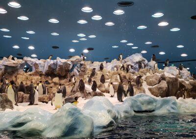 pavilón s tučňáky