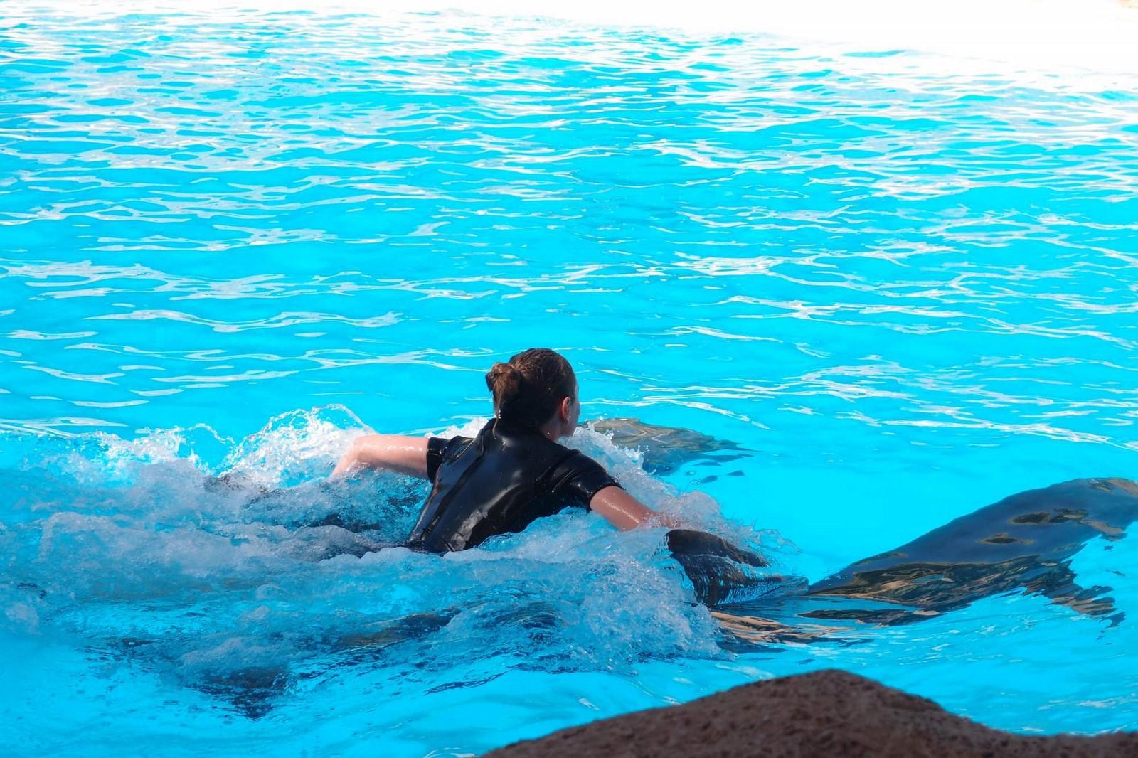 vystoupení s delfíny