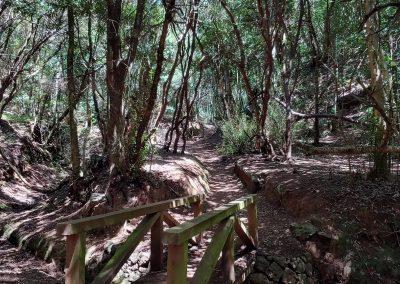 dřevěná lávka v lese